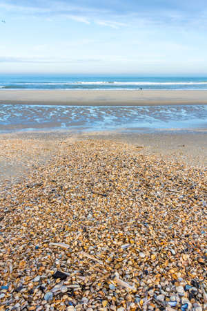 sunny deserted beach covered in shells