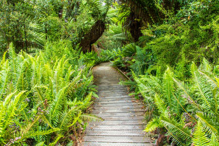 boardwalk leading through Hastings cave nature reserve temperate rainforest and river Imagens