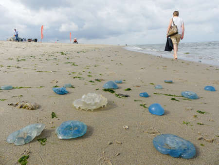 Kijkduin, The Hague, the Netherlands - July 28 2018: beachgoers walking among swarms of washed up jellyfish Editorial