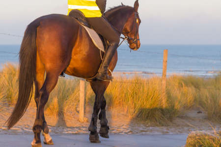 Kijkduin, The Hague - December 13 2018: horse being ridden through dunes to a beach at sunrise for recreation Editorial