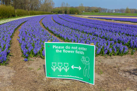 Lisse, the Netherlands - April 14 2018: dutch flower field in spring with warning sign no trespassers Imagens - 115968148