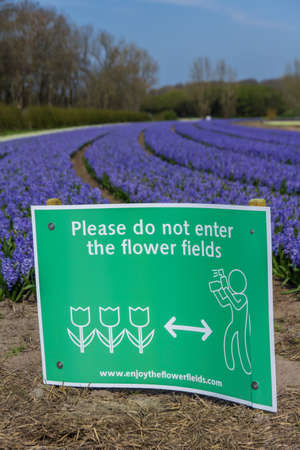 Lisse, the Netherlands - April 14 2018: dutch flower field in spring with warning sign no trespassers