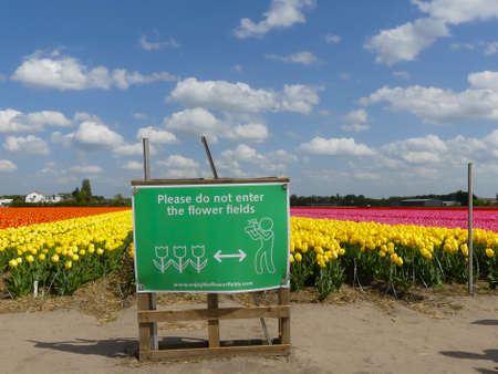 Lisse, the Netherlands - April 24 2019: fields of spring tulip flowers glowing in warm sunshine fenced off by razor wire and warning no trespass sign