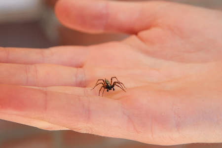 An active common house spider crawling on a persons hand