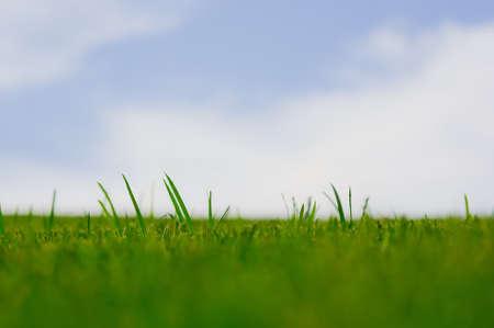 Vibrant green grass against pastel blue sky. photo