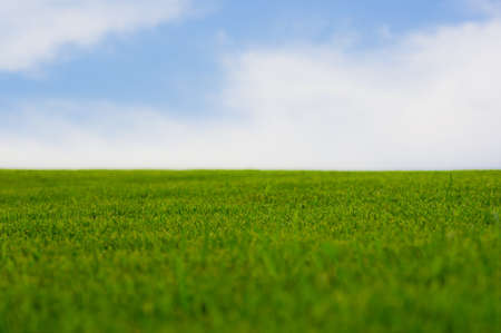 Vibrant green grass against pastel blue sky. photo