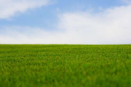 Vibrant green grass gegen Pastell-blauen Himmel. Standard-Bild