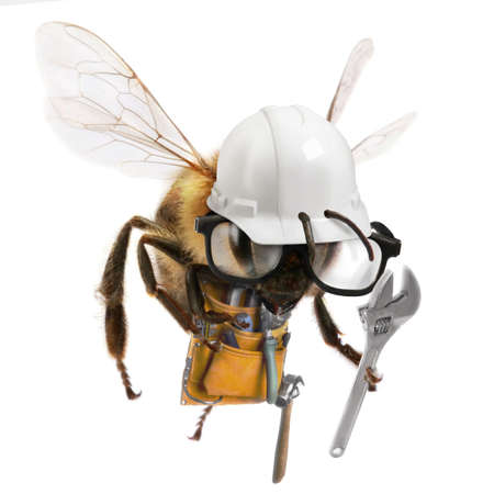 A worker Bee with construction attire and equiipment photo