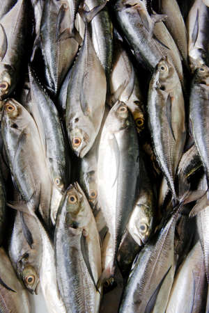 Top view of Sardine fishes on display in the market. Stock Photo