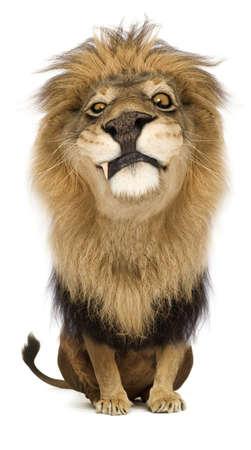 Ein Cartoon stolze König der Löwen starrte argwöhnisch Standard-Bild