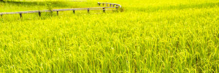 Horizontal shot of a paddy field with a wooden fence photo