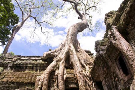 Riesige Silk Cotton Tree Ta Prohm auf einem Dach.