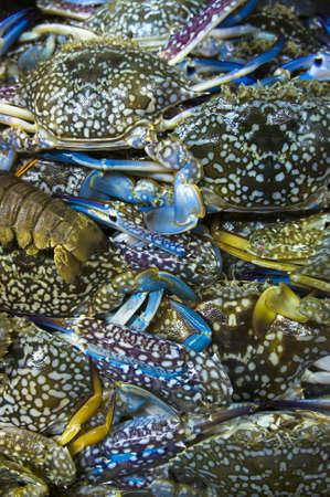 capture: Live Flower crab  Portunus pelagicus  stack up together Stock Photo