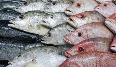 carnes: Vista lateral de la variedad de peces