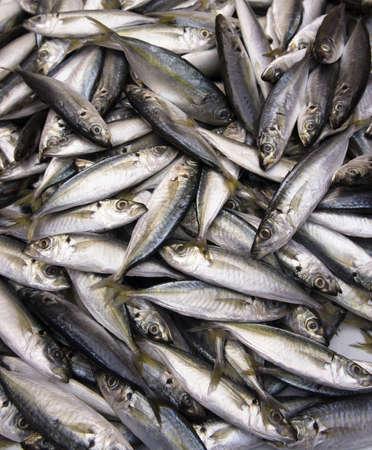Yellow Fin Fische auf dem Markt