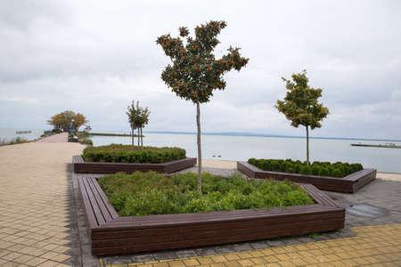 Rowan tree on pier. Three trees. Berrie of rowan tree. Thin tree Rowan. Rowan tree on the lake shore