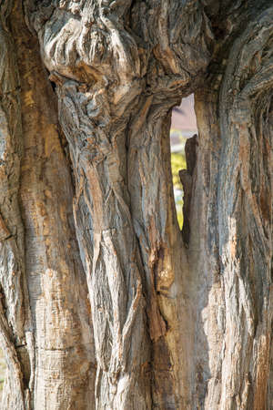 Thick tree trunk closeup. Wood texture close-up. Archivio Fotografico