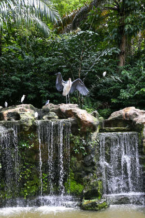 The stork with wide wings stands on top of a waterfall. Stockfoto
