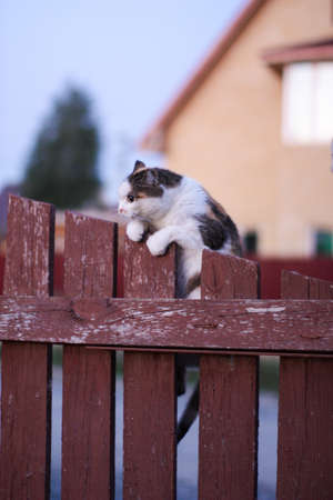 The cat dug her claws into the fence and strained. Looks stupid and is trying to climb up. Stock Photo