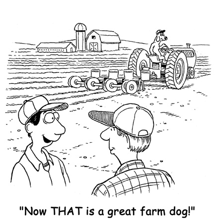terracing: great farm dog