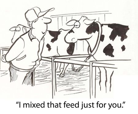 spoiled: farmer gives cow special feed