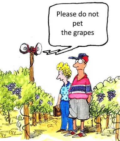 Gelieve de druiven niet te aaien Stockfoto