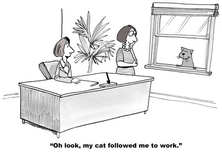 owner: Cat Followed Owner to Work Stock Photo