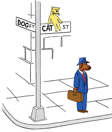 violate: Cat Street