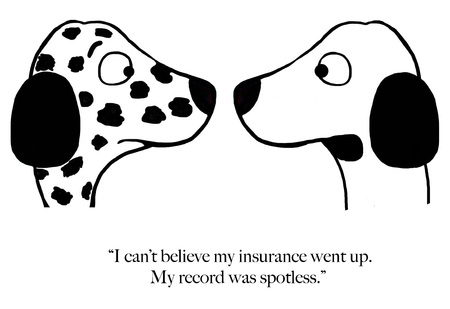 Dalmation is surprised that his insurance went up with spotless driving record Zdjęcie Seryjne