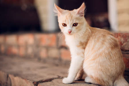 Cute red kitten sitting on the threshold, close-up Stockfoto