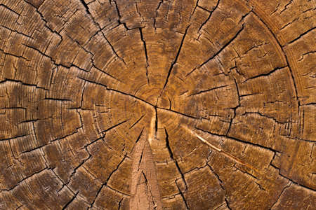 Cross-section of log, brown wood texture