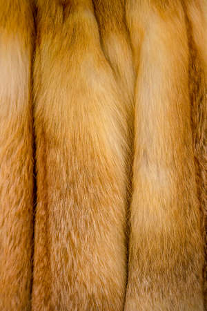 Fox fur. Red Fox tails. Several Fox tails close up
