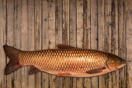 Fish white carp lying on the table. Fresh fish
