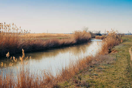 On the banks of the canal with water dry reeds. Stok Fotoğraf