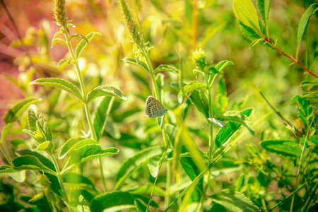 A butterfly sits on a green leaf in the grass Stock fotó