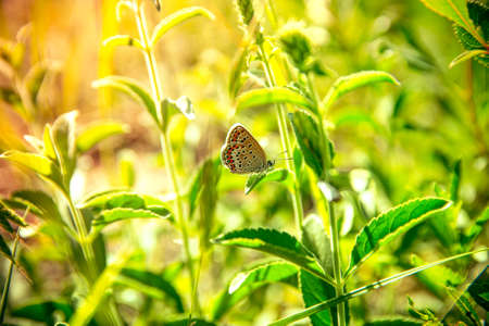 Beautiful butterfly sitting in the grass on a leaf