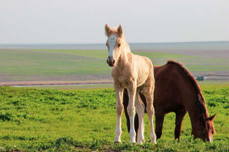 A foal with an adult horse grazing in a field