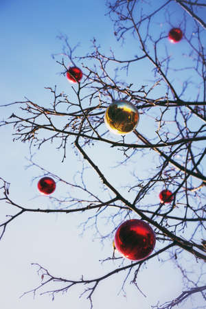 hapy: Bright colored Christmas decorations on a defoliated tree in Moscow, Russia Stock Photo