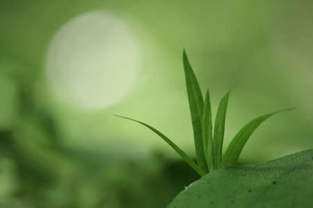 Young green plant on a greenish-brown blurry field-meadow background with a large whitish circle shaped sunbeam Banco de Imagens