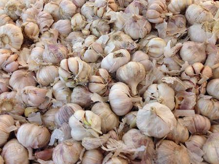 garlics: Fresh white garlics from supermarket
