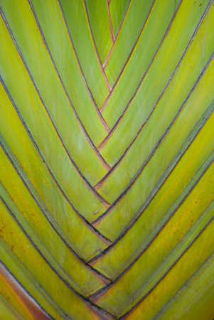 Palm Trunk-stem photo