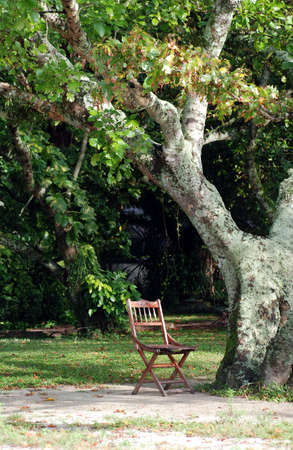 ghostly: Ghostly background - Wooden Brown chair under a tree