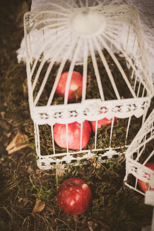 festively: Close up of elements of beautiful photobooth in autumn city park. Festively decorated white birdcages and red apples on ground. Image toned and stylized in retro style.
