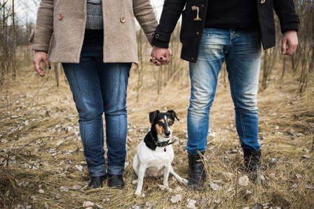 pregnant jeans: Pregnant couple standing together holding hands in spring forest. People dressed in warm coats and denim jeans playing with parson russell terrier dog outside.