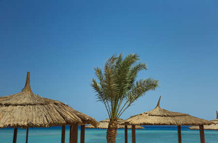 Beautiful tropical summer background. Tops of green palm, brown sun umbrellas, clear blue sky and scenic turquoise sea water. Horizontal color photo of summer sunny beach at luxury hotel resort. Archivio Fotografico