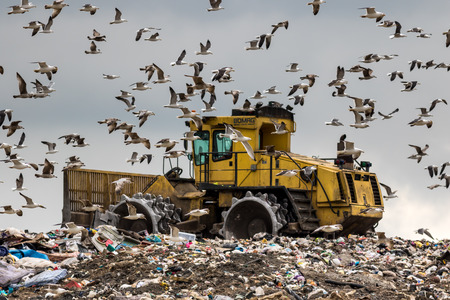 A Bulldozer works a landfill site attracting nuisance birds searching for food Editorial