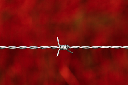 barbed wire fence: Taut shiny barbed wire over a blood red background