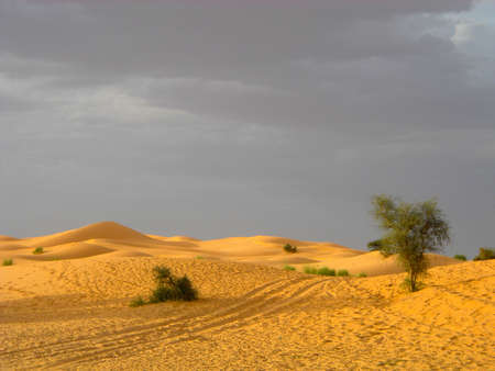 mauritania: Cloudy sand desert with dunes and tree in Mauritania
