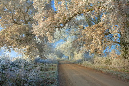 Hoar frost on trees, Cotswolds, Gloucestershire, England photo