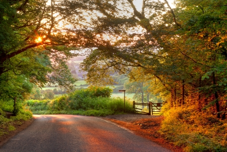 Wooded English country lane at sunset
